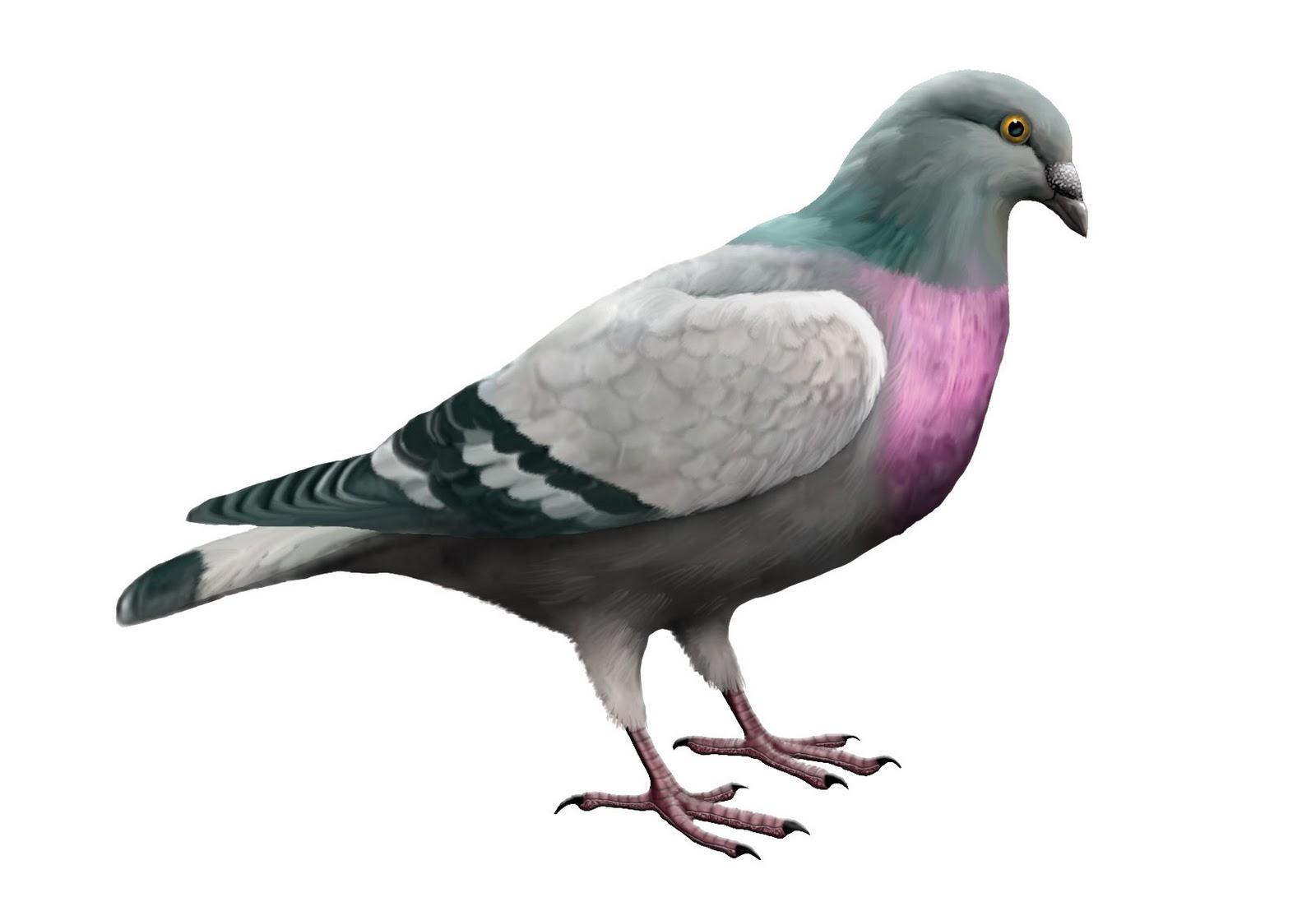 2.5 millones de euros en apuestas de carreras de palomas Paloma