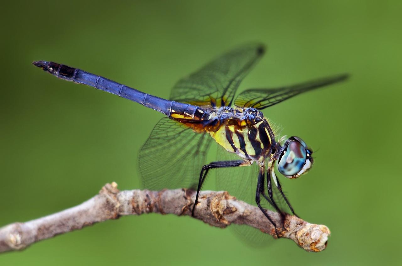Insecte cu zoom