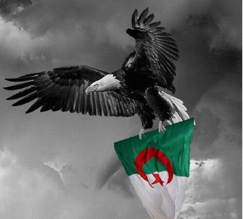 لكل احباء الجزائر  ادخلواااااااااااااااااااا اااااااا 2248965137_small_1.j