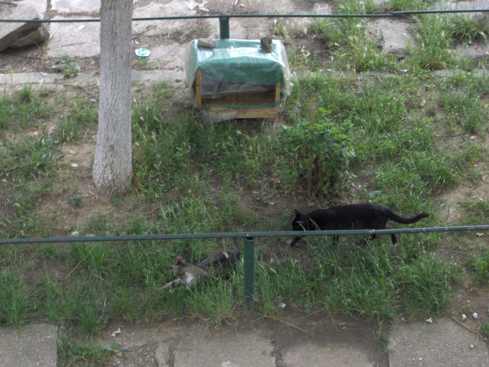 Cotetul si pisicile